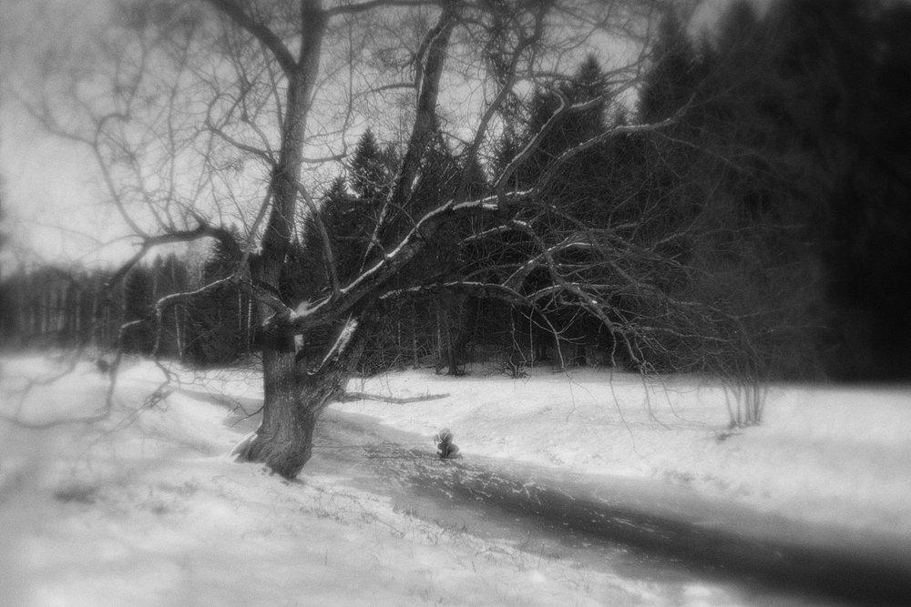 monoclemania-pavlovsk-park-03.jpg