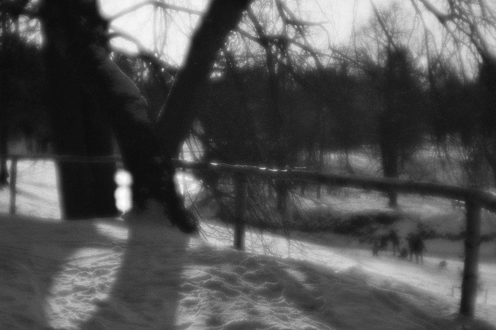 monoclemania-pavlovsk-park-16.jpg