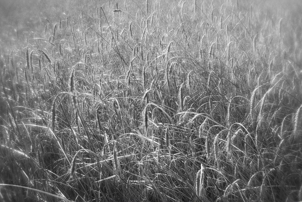 monoclemania-pskov-province-043.jpg