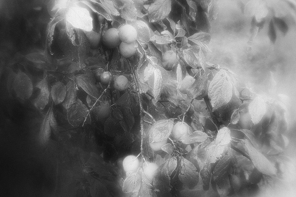monoclemania-pskov-province-049.jpg