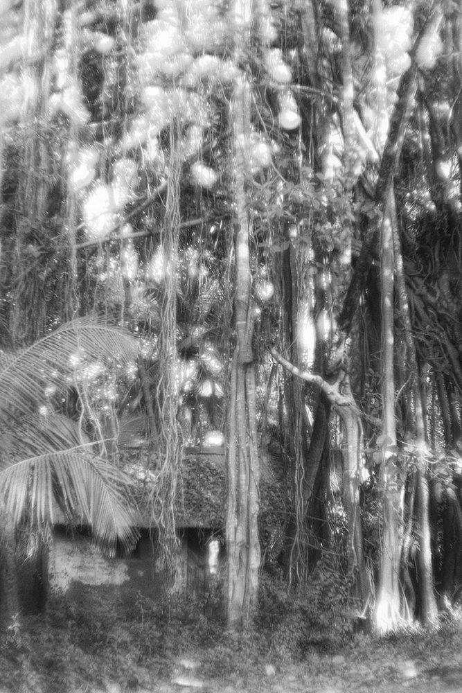monoclemania-India-50.jpg