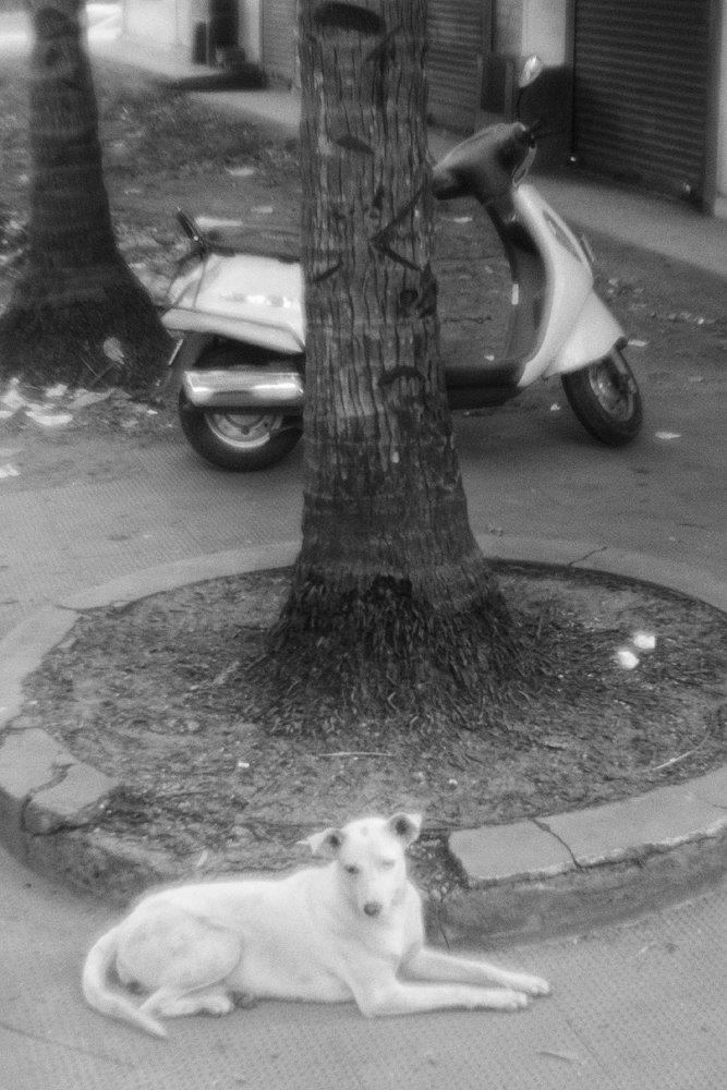 monoclemania-India-52.jpg