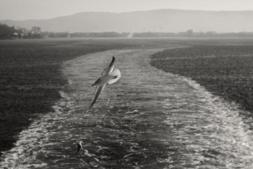 monoclemania-Turkey-21.jpg