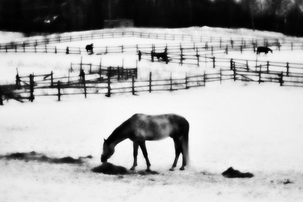 monoclemania-horse-winter-1.jpg