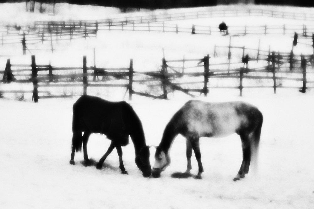 monoclemania-horse-winter-2.jpg