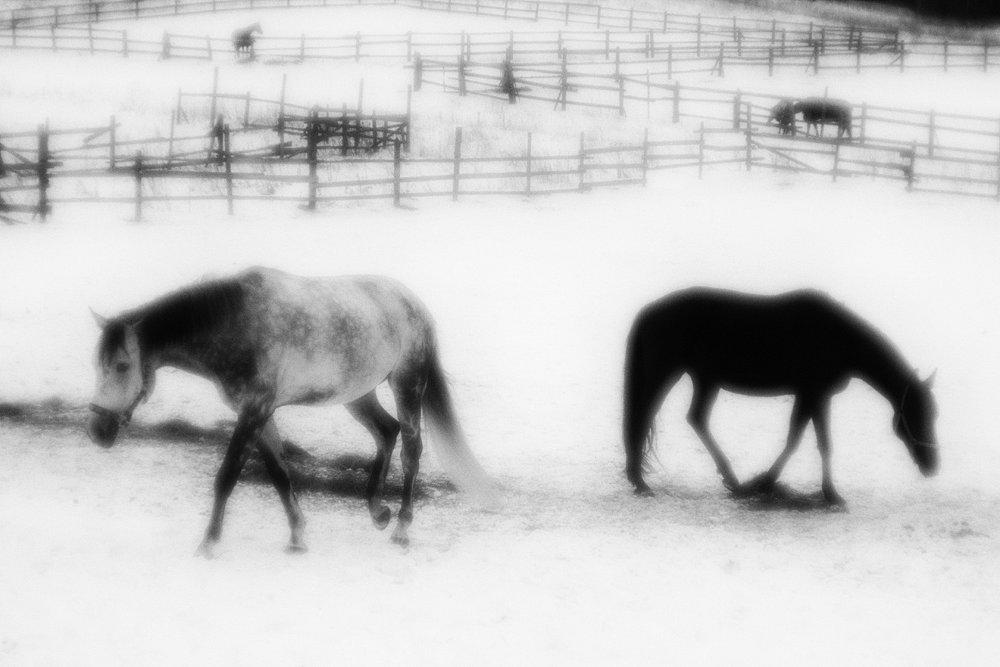 monoclemania-horse-winter-4.jpg