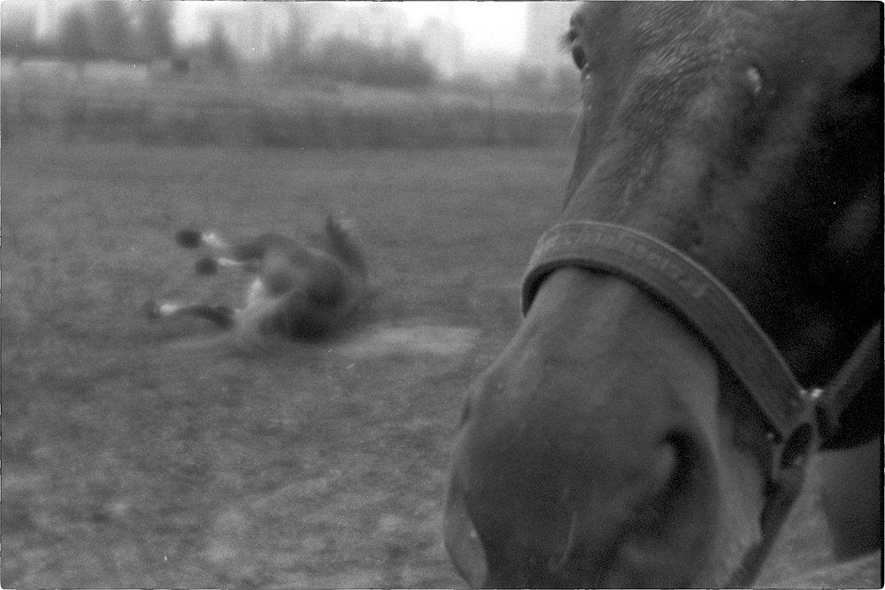 monoclemania-horse-summer-2.jpg