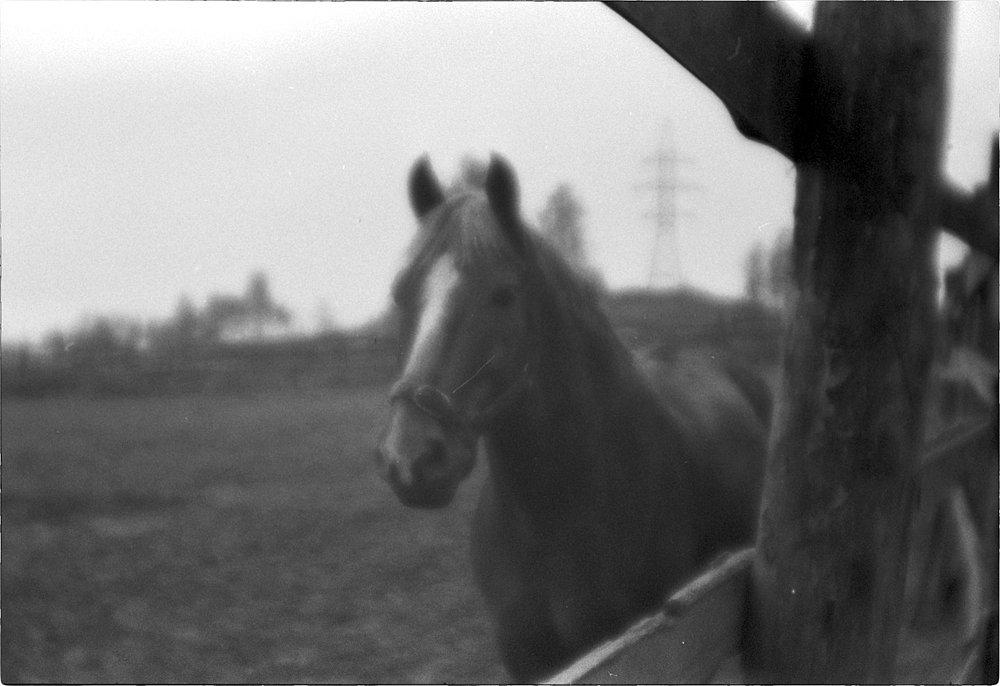 monoclemania-horse-summer-3.jpg