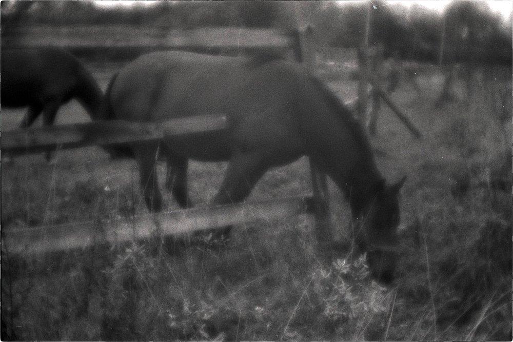 monoclemania-horse-summer-4.jpg