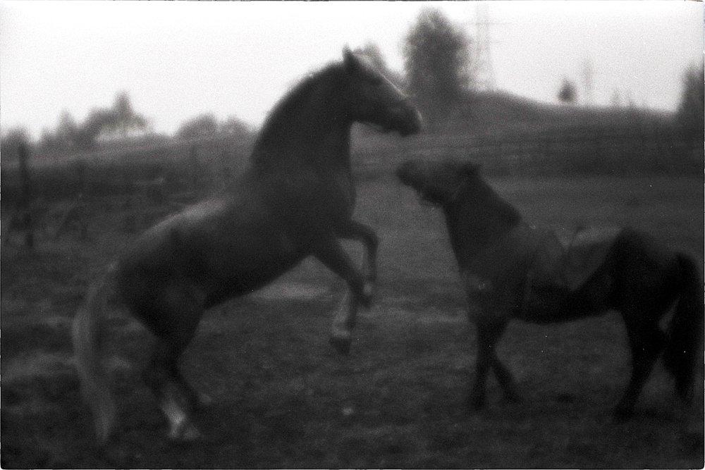 monoclemania-horse-summer-5.jpg