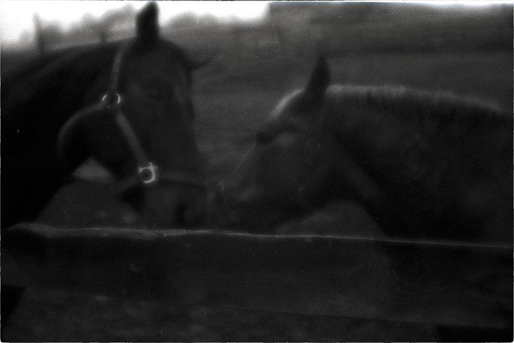 monoclemania-horse-summer-6.jpg