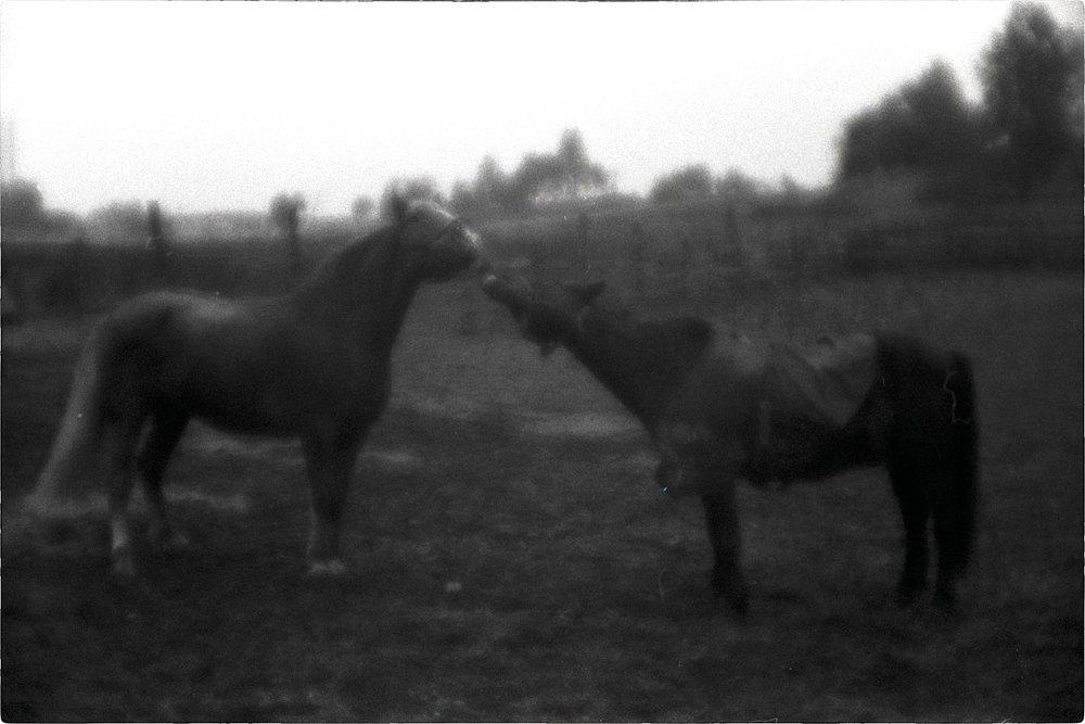 monoclemania-horse-summer-7.jpg