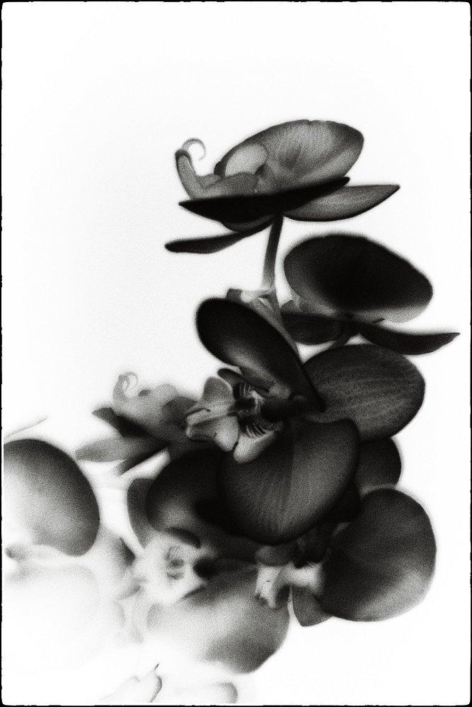 monoclemania-flowers-2.jpg