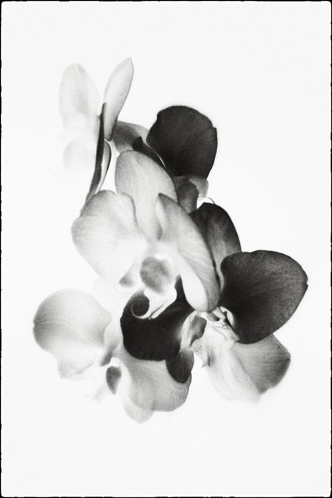 monoclemania-flowers-3.jpg
