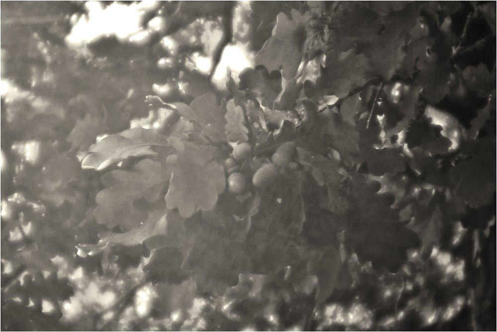 monoclemania-pskov-province-2018-2.jpg