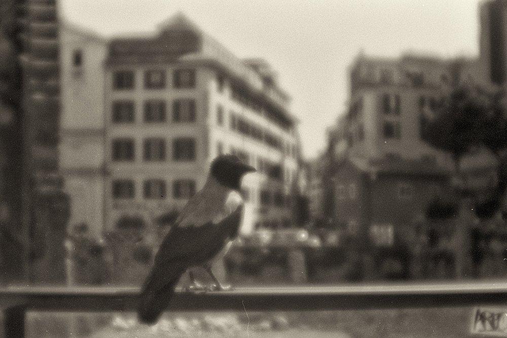 monoclemania-vacanze-romane-44.jpg